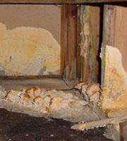 poria Mold Inspection