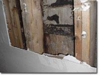 stachbotrys Mold Inspection